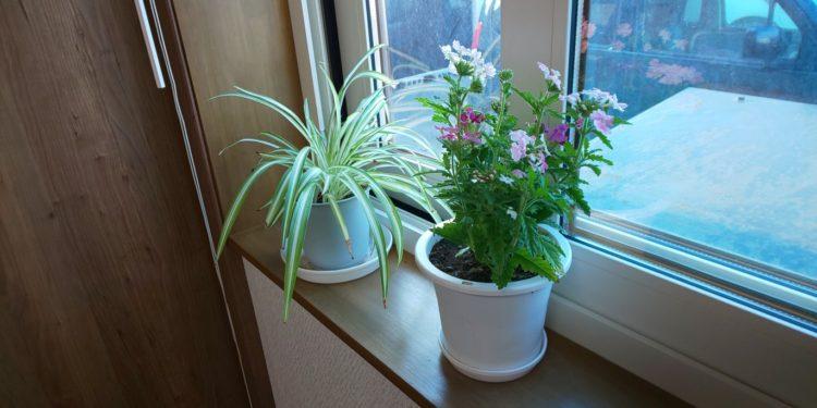 事務所の花